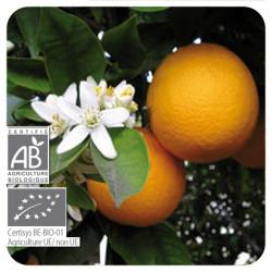 Orange douce - Pranarôm